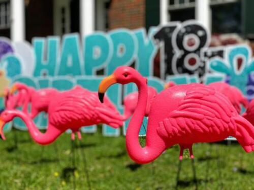 18th birthday yard flocking washington dc