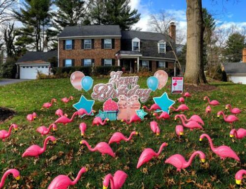 flamingo flocking yard card springfield va
