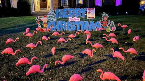 christmas flamingo flocking yard signs springfield va