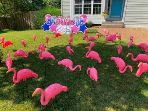 standard yard card flamingo flocking alexandria va